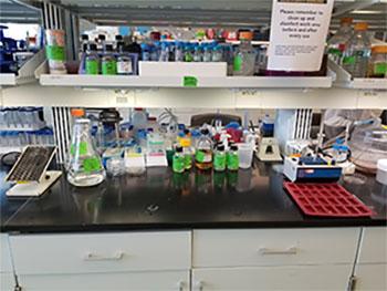 Synthetic Biology Laboratory